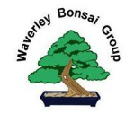 Waverley Bonsai Group
